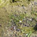 池回りの草たち