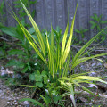 2014年5月の植物まとめ【下草・池】