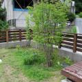 2014年6月の植物まとめ【高木】
