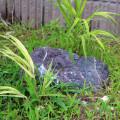 2014年6月の植物まとめ【下草・池】