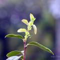 2014年8月の植物まとめ
