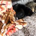 毛布遁の術