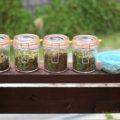雑草でお茶を作ってみた