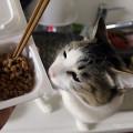 納豆大好き!!
