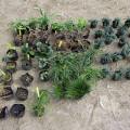 下草を植えました