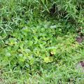 浮き草間引き